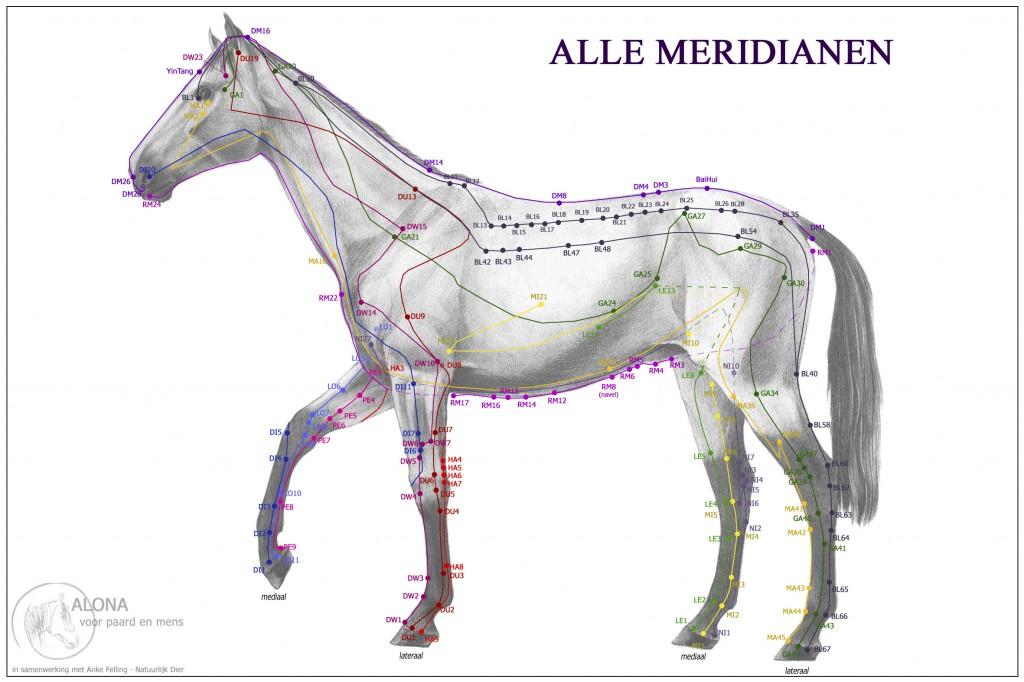 Acukaart Paard - Huid - Alle Meridianen